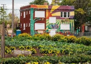 Greg Sheldon talks about Albany Victory Garden