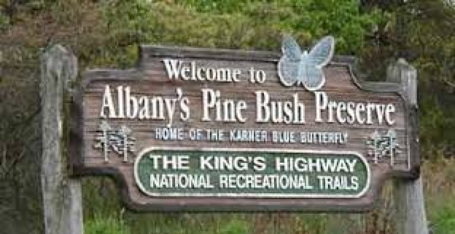 Your help is needed for the pine bush